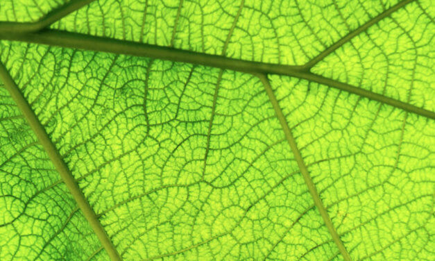 What is photosynthesis or photosynthetic light?