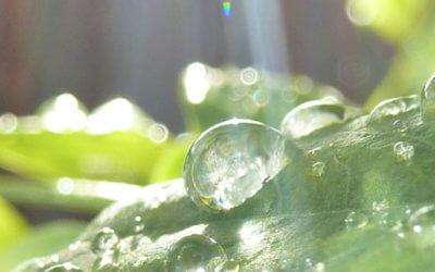 La perception de la lumière par la plante et l'oeil humain