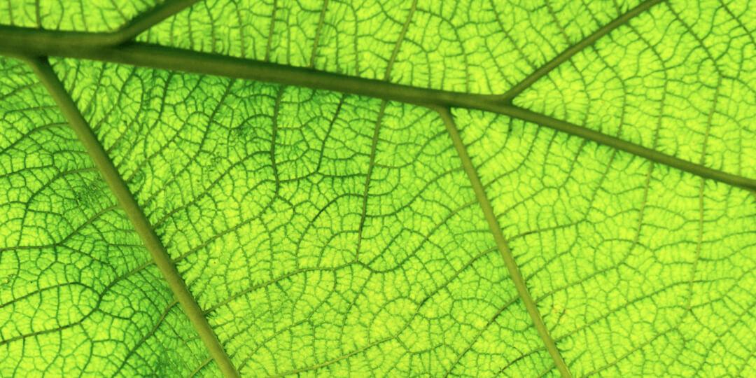 Qu'est-ce que la photosynthèse ou lumière photosynthétique ?