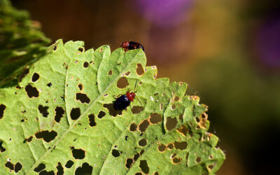 La lumière comme moyen de lutte efficace contre les insectes ravageurs